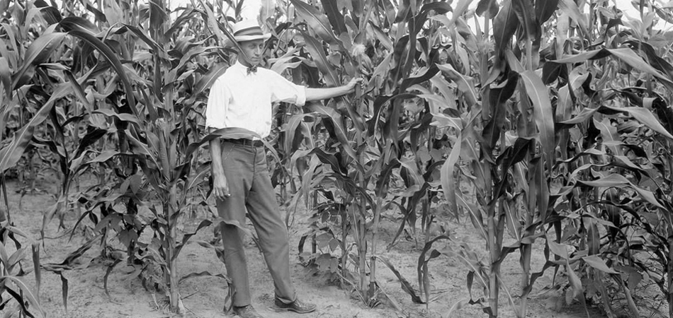 Corn planted on farm in Geneva County, Alabama, 1926